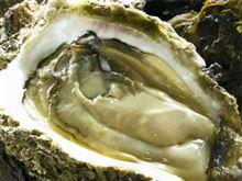 岩牡蠣 食いてぃー
