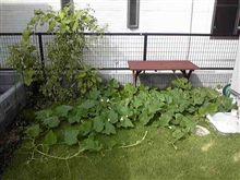 続 家庭菜園