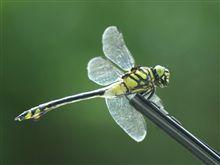 Dragonfly! (ちょっとグロいかも?)