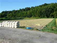 稲刈りとコンバインとパラソルと小岩井純水青りんごと保冷剤。