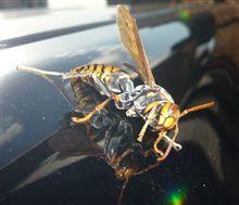 洗車中の出来事