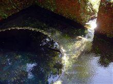 柿田川 湧水
