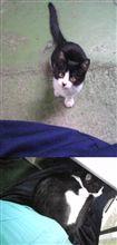 会社に野良猫