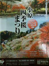 小原四季桜祭りもうすぐ!