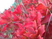 〇〇心と秋の空