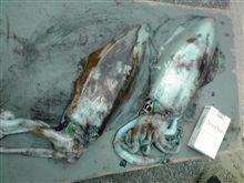 浦島漁港の釣果