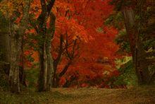 そうだ、紅葉の季節だ!