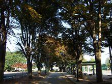 ☆秋色の公園☆
