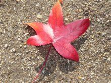 秋が飛んできた