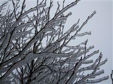 霧氷\(~o~)/