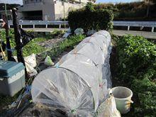 葉物野菜の種蒔き完了