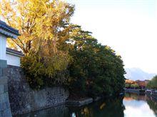 駿府城跡 紅葉全開です・・・