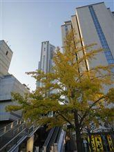 京都探訪の旅~2010年秋