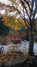 峠は落ち葉がすごい