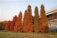 近所の紅葉など。
