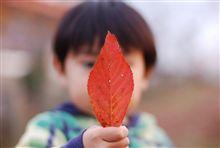 真っ赤な落ち葉。