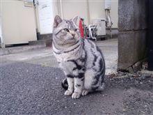ノラ猫ちゃん