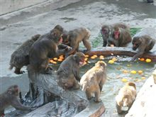 上野のお猿も冬至。。。