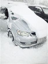 雪降りまくりだね(汗)