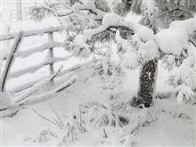 白い大晦日です~