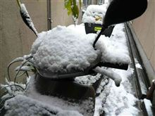 雪ですなぁ〜