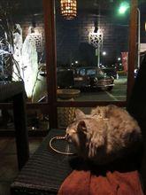 ハルと深大寺のカフェへ