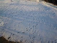 庭の雪が溶けません(^^;)