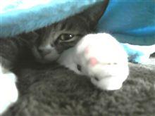 毛布の中からコンニチハ ノ