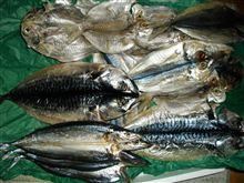 魚がたくさん...