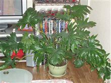 観葉植物です。