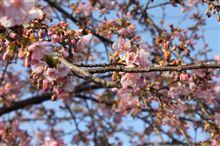 手賀沼 早咲きの桜