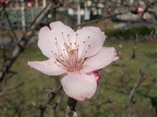 春の訪れ・・・。