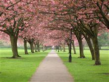 桜が咲く季節はもうすぐですね(^^)