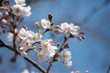 春を感じる3月の福岡定例会