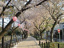 桜はまだか?