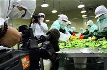 ( `ハ´)「日本に向けて毒キャベツ285㌧送るアル。検疫検査も特別扱いしてやったアル」