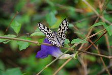 蝶々園...