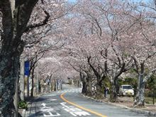 今年もまた桜の季節がやってきました♪