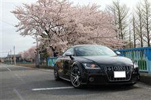 春です....桜満開です♪