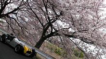 セブンをドライブしながら花見