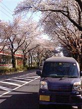 ハイスペック車引き取り、桜