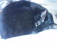 ネコと寝てました~(^_^;