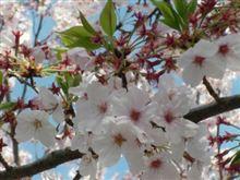 桜舞い散る・・・・・