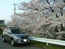 今年も桜の季節がやって来ました