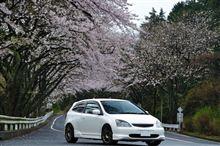 箱根ターンパイクの桜など