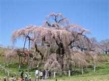 三春滝桜へGo♪
