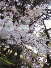 春ですね~♪