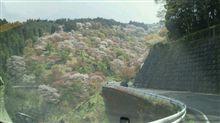 桜見物に~