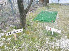 桜ヶ丘コース