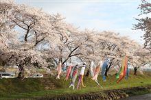 桜を撮りに行ってみた